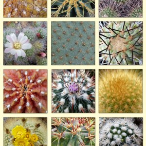 Donateur Anne Walters cactussen collage